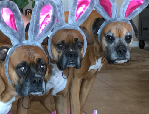 Happy Easter from Ava, Jager and Ozzy