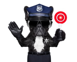POLICE DOG ON DUTY WITH stop sign and hand , isolated on white blank background.