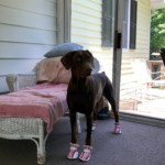 Summer In Her New Pink Dog Booties