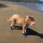 Greta on the beach in Costa Rica