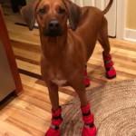 Luna's boots
