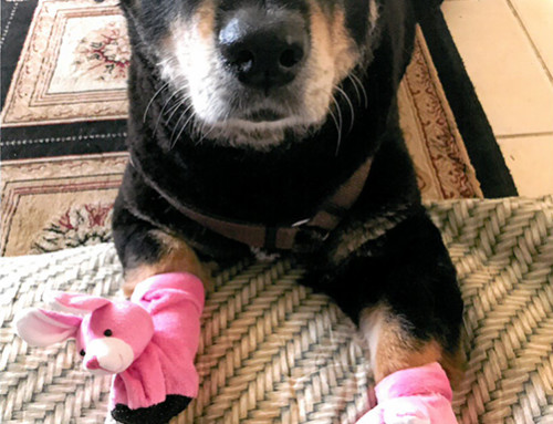 Charlie with his Pink Bunny Slippers