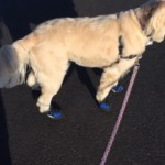 Lucy's New Boots