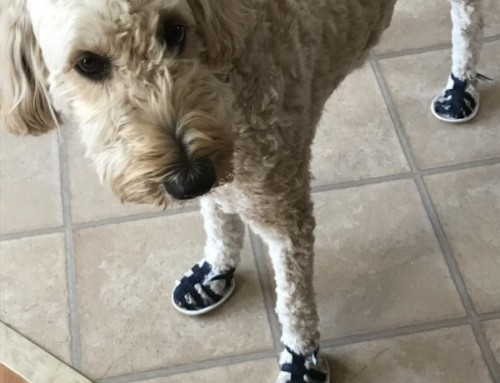 Sophie in Sandals