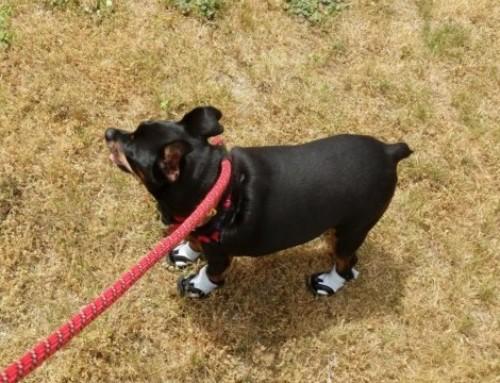 Batty's new booties