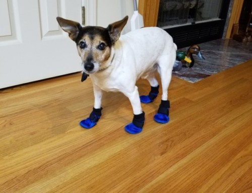Jackson with his new booties!