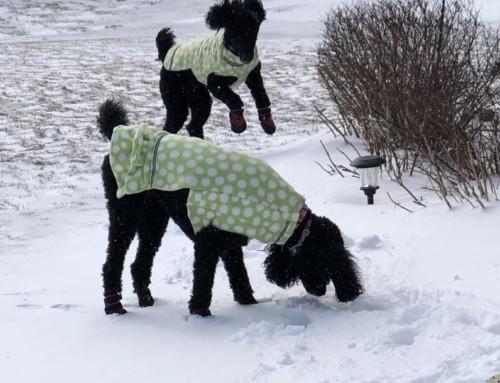 Snow boots!