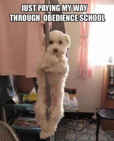 funny-dog-meme_3
