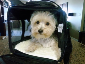 cooper in southwest airline carrier