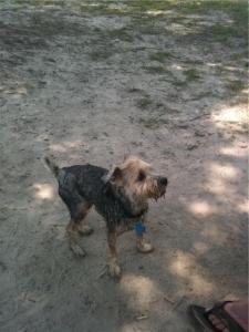 cooper dirty dog park
