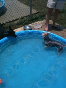 cooper in pool at dog park