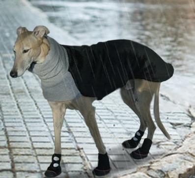 dog walking in rain boots