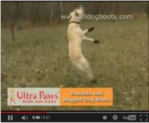 ultra paws play hard
