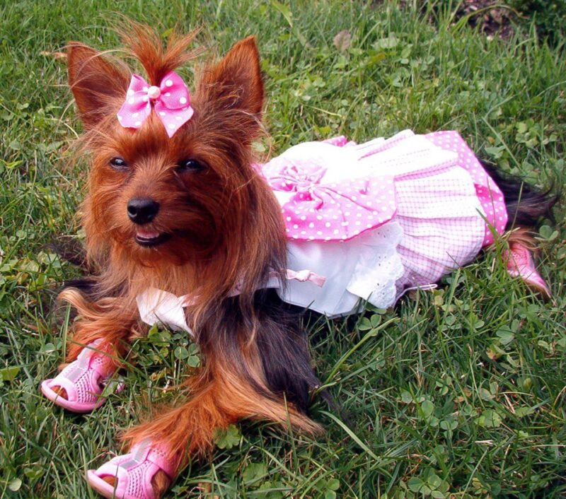 Image result for dogs wearing sandals