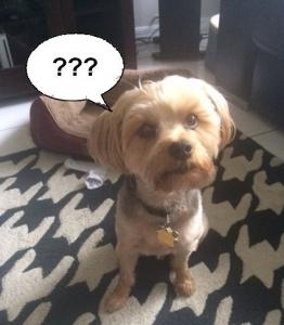 dog confused while training