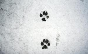 snow dog trail