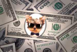 taxes-dogs-new