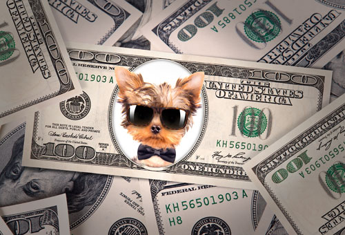 Are There Tax Breaks For Pet Owners?
