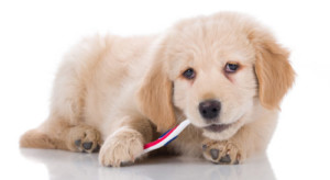 dog-brushing-teeth-new