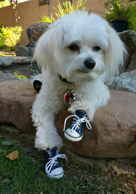 zoe-in-sneakers-new