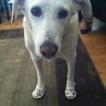 Bailey In Sandals