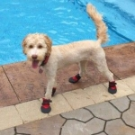 darby's swim shoes