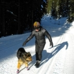 Shepherd Mix Wearing Dog Ski Boots | Amy