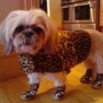 Leopard Dog Booties!