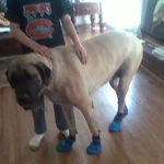 Big Dog, Big Boots