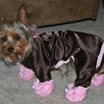 Moka & His Bunny Dog Slippers
