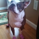 Boston in Pink