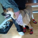 Sookie can walk with confidence