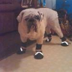 Bulldog Hefty