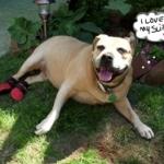 Dog Booties Instead of Knee Surgery