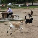 Dog Booties For The Dog Park | Camus