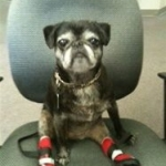 Dog Booties for Dogs Dragging Paws