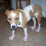 Dog Sneakers Help Protect Rescue Dog