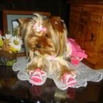 Yorkie Looks Adorable In Pink Flower Sneakers