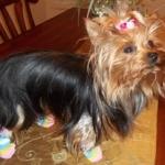 Hello Kitty Dog Socks