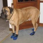 Neo Mastiff Dog Booties