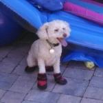 lizzie in pool booties