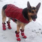 German Shepherd Boots