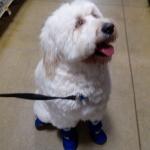 Max shopping at PetSmart