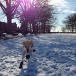 Hooch running in the snow