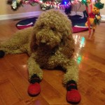 Curly Fry loves Christmas!