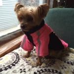 Great Dog Winter Jacket!