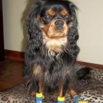 Gatlin sporting Doggy Socks!!