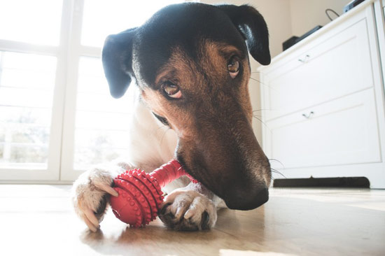 Toys Your Dog Will Love
