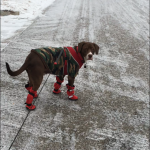 Louie styling and profiling