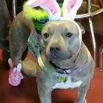 Easter Pup